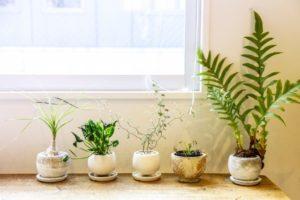 観葉植物に殺虫剤をかけたら枯れた?!元気がない原因と殺虫剤の選び方