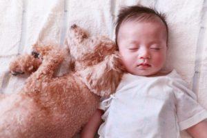 犬が人間の赤ちゃんを舐める理由は?舐める場所によって気持ちが違う?