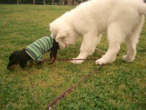 犬が他の犬のお尻のにおいを嗅ぐ理由は?やめさせたほうがいいの?