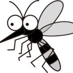 蚊の寿命はどれくらい?生まれてから死ぬまでの暮らしぶりを解説