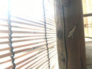 窓を閉めていても虫が入ってくる!どこから入ってくるの?対策は?